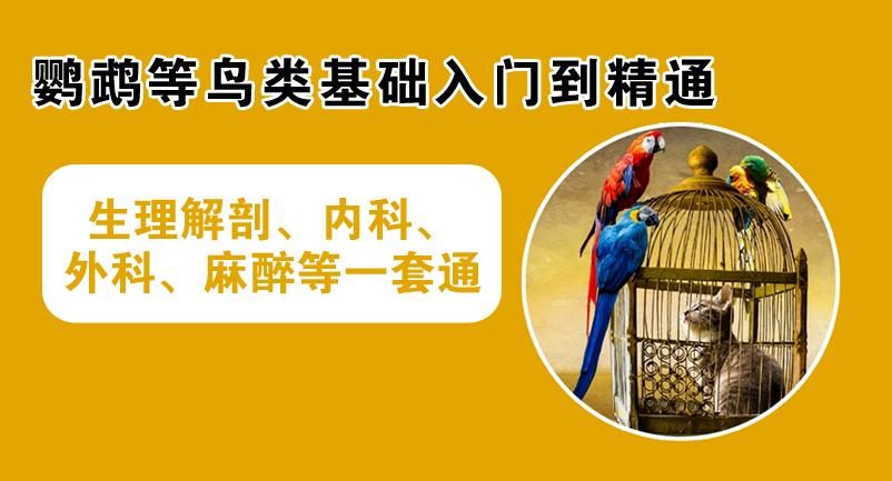 飞禽异宠(鹦鹉的诊断治疗)
